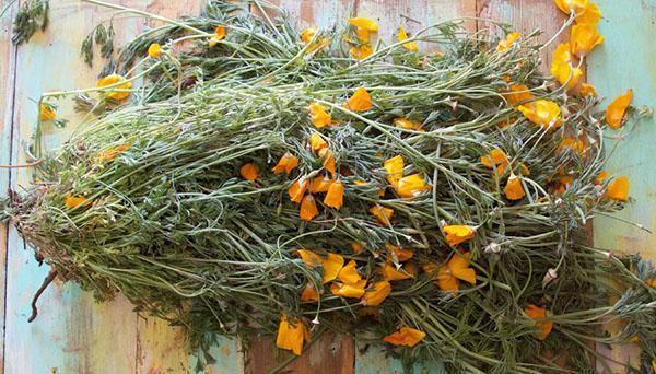 Собранные растения эшшольции