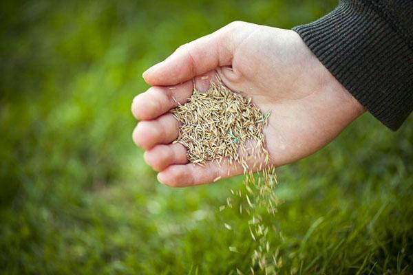 проверка семян