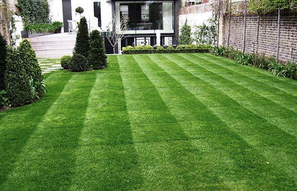 газон из смеси трав