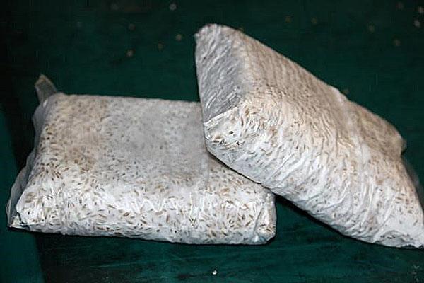 мицелий вешенок