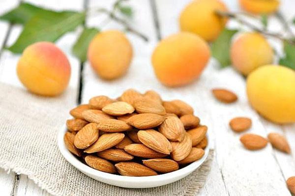 ядра косточек абрикоса