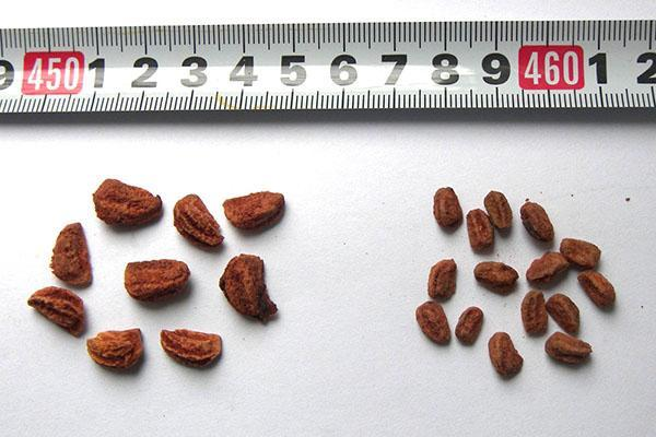 отбор семян для посадки