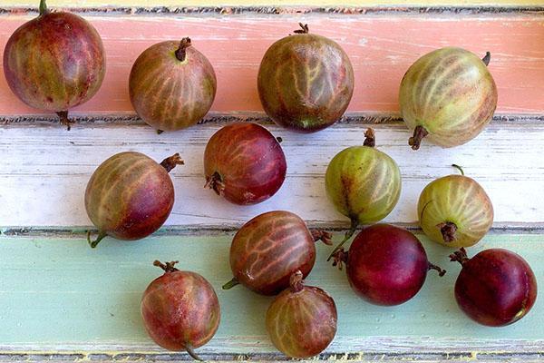 плотные целые ягоды