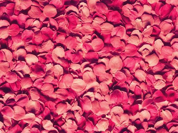 собрать лепестки роз