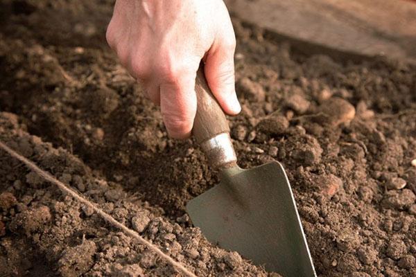 посеять семена