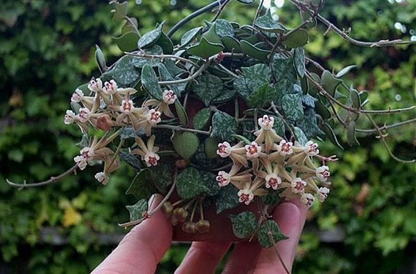 экзотическое растение