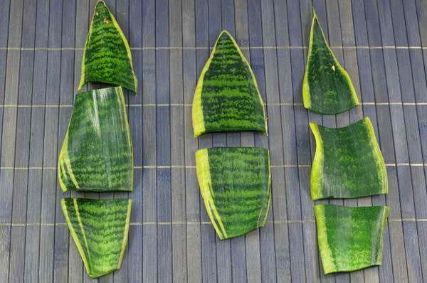 размножение деленками листа