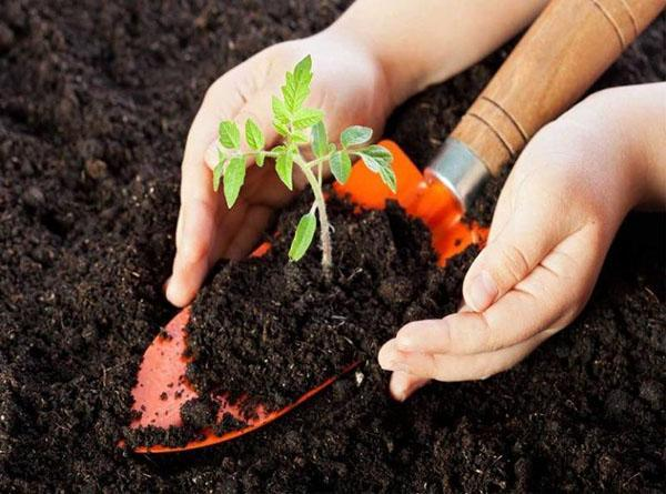 питательная почва