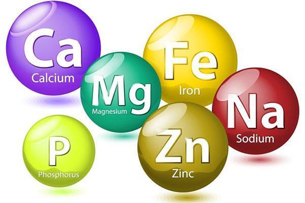 необходимые ежевике витамины