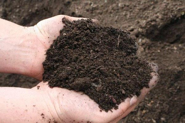 почва со слабокислой реакцией