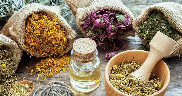 использование лечебных свойств растений