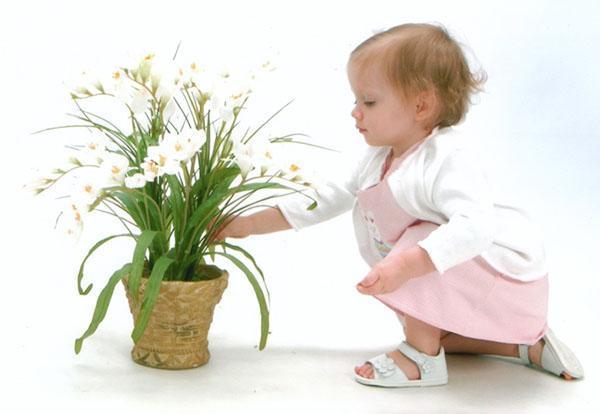 опасные для ребенка цветы