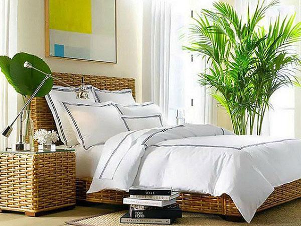 экзотические растения в спальне