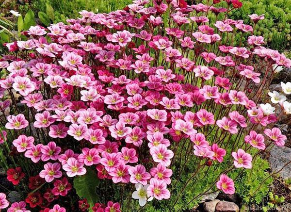 цветочный ковер