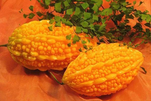 успешное выращивание момордики
