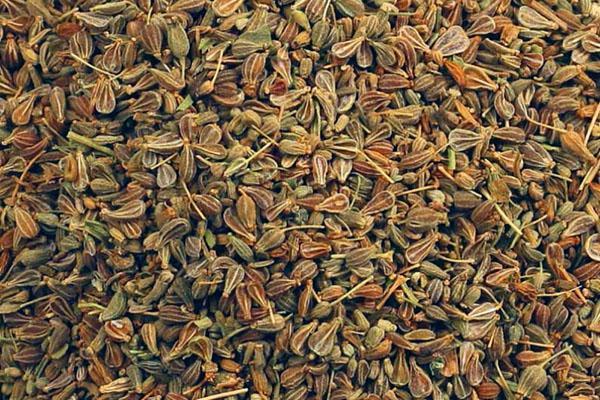 сушим семена аниса