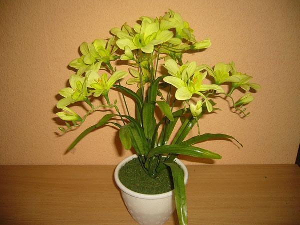 выращивание фрезии в домашних условиях