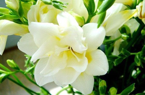 нежное цветение