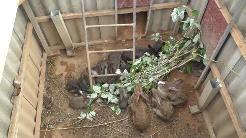кролики в яме